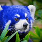 Firefox 57 Quantum 150x150 - Firefox 57 Quantum1